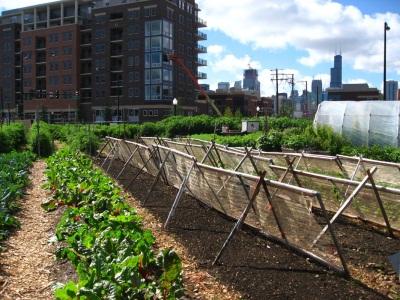 new-crops-chicago-urban-farm_orig